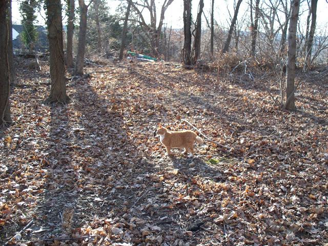 October cat in the Woods